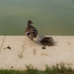 reflecting_pool_birds2